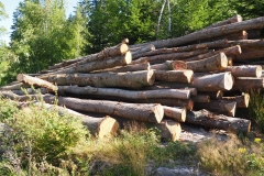 Holz01